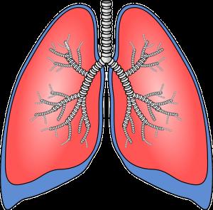 Pulmones. Herbolario El Monte. Medicina china